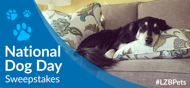 National Dog Day Sweepstakes